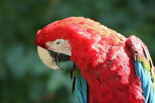 Parrot, Ara, Bird, Zoo, Animal, Animal World, Plumage