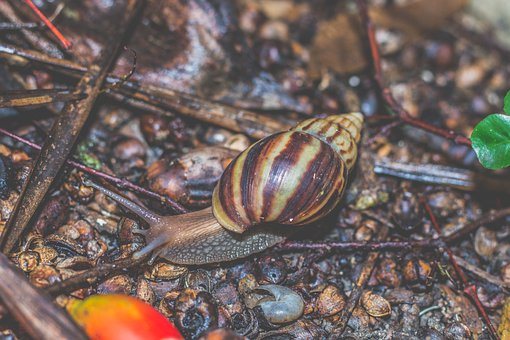 Clams, Snail, Shell, Animals, Creatures, Snail Shell