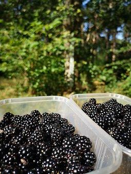 Autumn, Blackberry, Harvest, Hedgerow, Gathering, Fruit