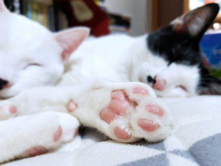 Cat, Sole Of The Foot, Proverbs, Bedtime, Bed, Break