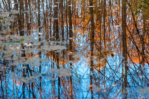 Reflection, Forest, Fall, Water, Blue, Lake, Nature