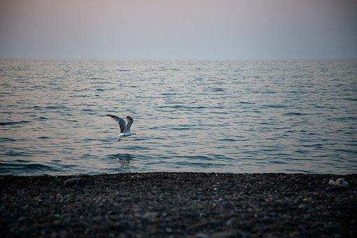 Sea, Dawn, Beach, Nature, Seagull, Vacation