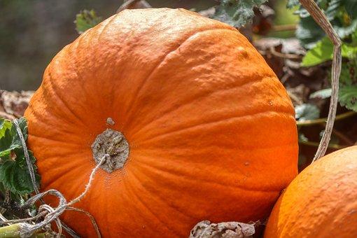 Pumpkin, Autumn, Vegetables, Harvest, Food, Decoration