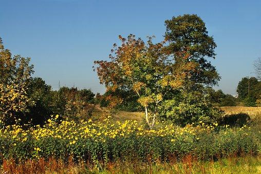 Meadow, Jeśień, Flowers, Tree, Forest, Figure, Grass