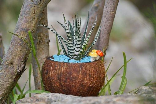 Cactus, Ornament, Plant, Flowerpot, Gift, Decor, Flower