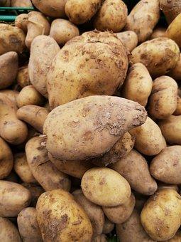 Potato, Vegetable, Food, Harvest, Agriculture, Healthy