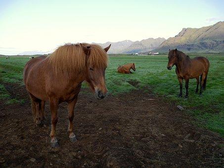Iceland, Grass, Meadow, Mountains, Glacier, Farm