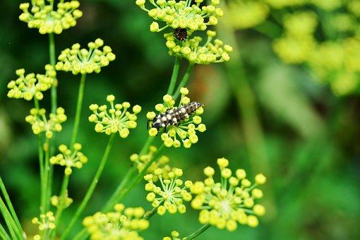 Larva, Ladybug, Ladybeetle, Ladybird, Immature, Insect