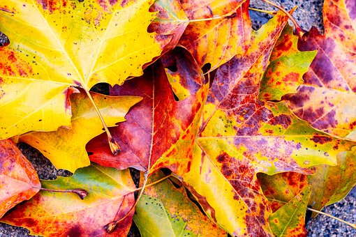 Fall, Leaves, Yellow, Red, Orange, Color, October