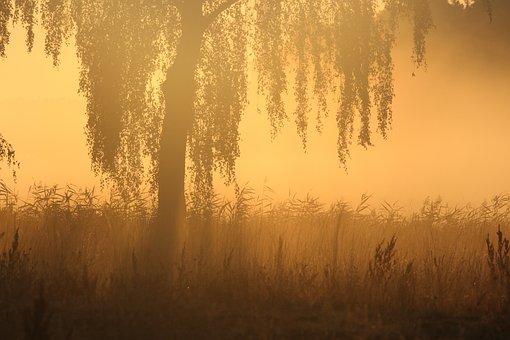 Morning Mist, Sunrise, Mood, Nature, Landscape, Fog