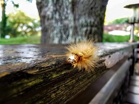 Caterpillar, Nature, Insect, Butterfly, Close Up