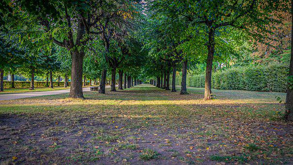 Tree Lined Avenue, Green Area, Rush, Trees, Garden