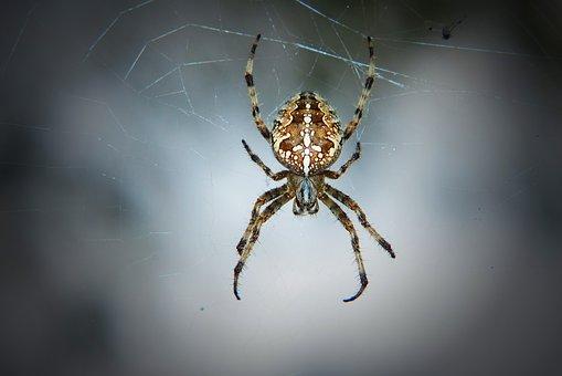 But When Orange, Female, Spider, Scary, Hairy, Animals