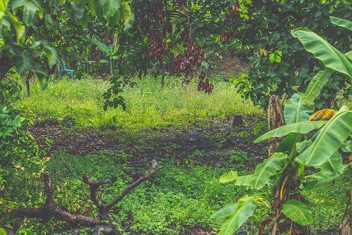 Pa, Green, Fresh, Nature, Emotion, The Landscape, Tree
