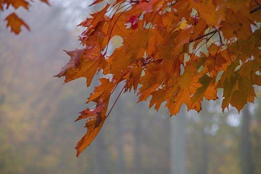 Red, Foliage, Autumn, Branch, Leaf, Clone, Tree, Season