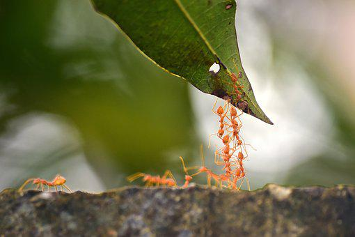 Ants, Facts, Nature, Facsinating, Tree, Summer, Ecology