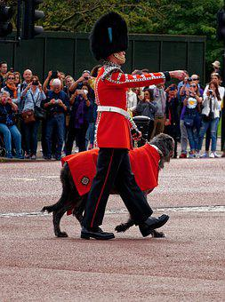 Soldier, Dog, Army, Use Dog, Guard