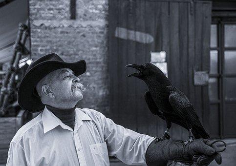 Raven, Bird, Crow, Black, Pen, Plumage, Nature, Flying