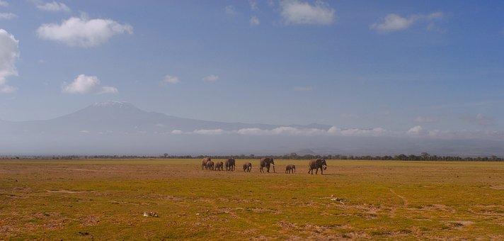 Elephants, Kilimanjaro, Climate Crisis, Drought, Kenya