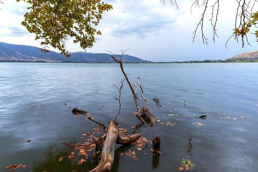 Lake, Tree, Fallen, Landscape, Clouds, Sky, Waters