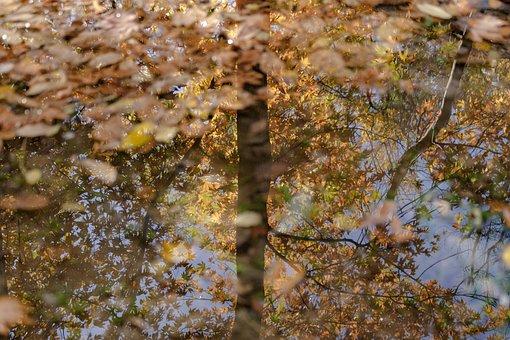 Fall, Autumn, Nature, Colorful, Qom Province