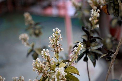 Flower, Bouquet, Nature, Floral, Decoration, Design