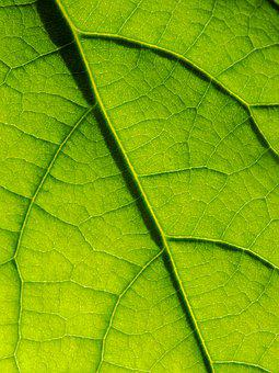 Leaf, Macro, Green, Nature, The Background, Life, Grow