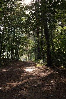 Landscape, Forest, Walk, Road, Summer, Hiking Trails