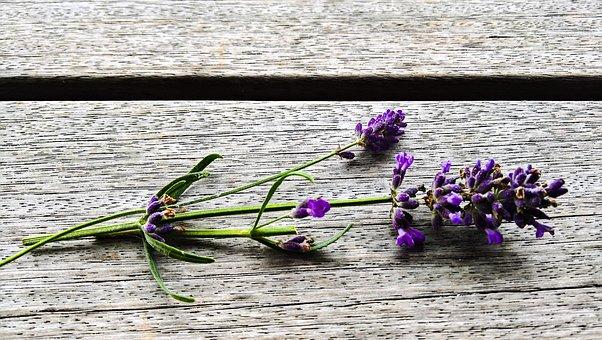 Lavender, Flowering Twig, Ornamental Plant