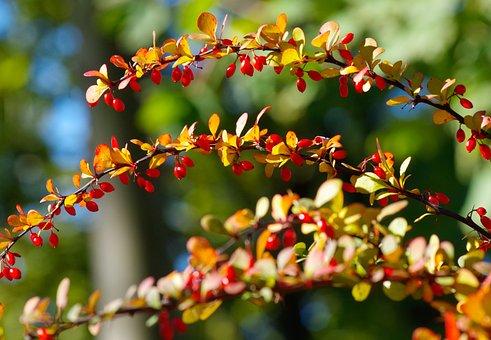 Autumn Colours, Autumn, Leaves, Nature, Fall Leaves