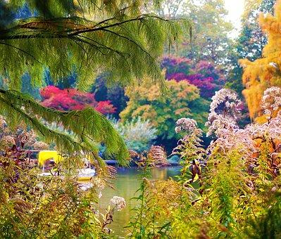 Autumn, Colorful, Color, Nature, Leaves, Fall Foliage