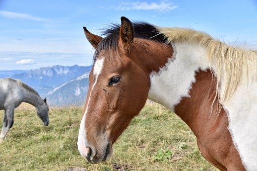 Horse, Horse Walk, Equine, Nature, Prairie, Ruminant