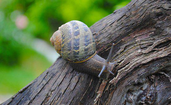 Snail, Animal, Shell, Nature, Slow