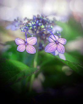 Flowers, Plants, Nature, Petal, Pink, Beauty, Garden