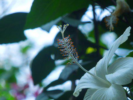White, Flower, Bloom, Plant, Nature, Flora, Floral