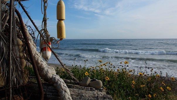 Beach, Flowers, Driftwood, California, Sand, Waves
