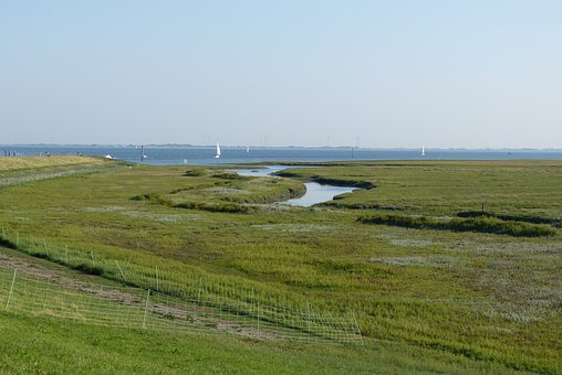 Spiekeroog, Nature, Landscape, Sea, Meadow, Coast, Rest