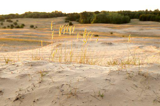 Steppe, Sand, Spikes, Landscape, Nature, Desert, Sandy