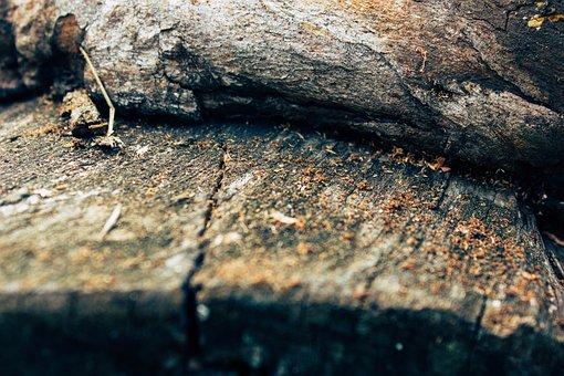 Wood, Chipper, Log