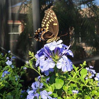 Butterfly, Flower, Garden, Blue, Brown