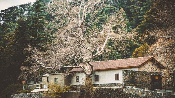 Cyprus, House, Tree, The Façade Of The, Street