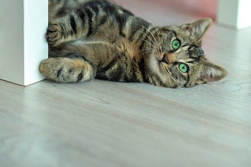 Domestic Cat, Patterned Cat, Wild Cat, Fur, Predator