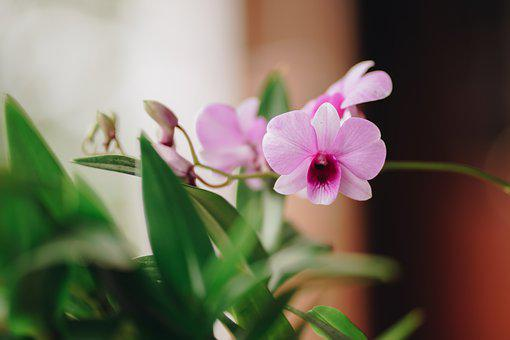 Orchid, Flower, Blooming, Beautiful, Beauty, Bright