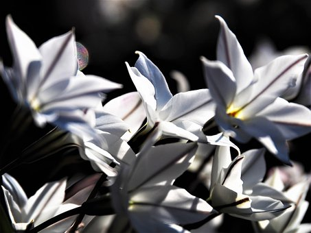Nature, Spring, Flowers, White