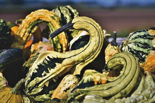 Pumpkin, Fruit, Autumn, Choose, Food, Vegetables