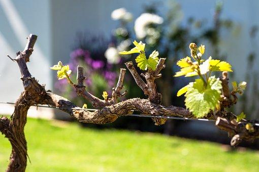 Spring, Nature, Branch, Blossom, Leaf, Green, Plant