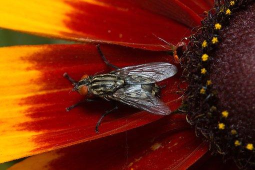 Insect, Fly, Macro, Flower, Garden, Meadow, Flowers