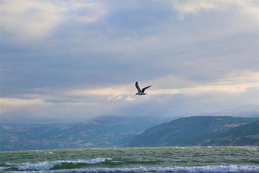 Lake, Seagull, Nature, Mountains, Water, Sky, Bird
