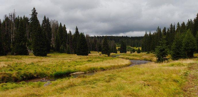 River, Trees, Grass, Landscape, Nature, Water, Modrava