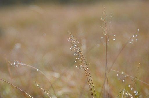 Background, Grass, Nature, Green, Texture, Pattern